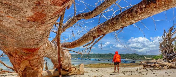 Pantai Plengkung Banyuwangi