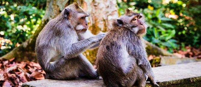 Sangeh Bali Monkey Forest